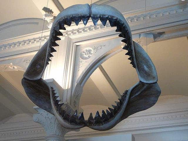 The 70-foot-long, 50-ton Megalodon was the biggest shark in history, a true apex predator that counted everything in the ocean as part of its ongoing dinner buffet, including whales, squids, fish and dolphins. More about Megalodon