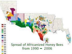 AfricanizedBeeSpread1990-2006